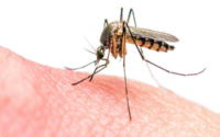 Mosquito prevention home remedies in Hindi